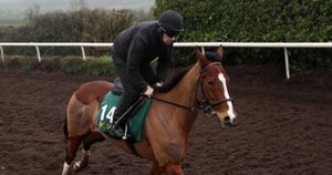 Faugheen limbering up at Closutton
