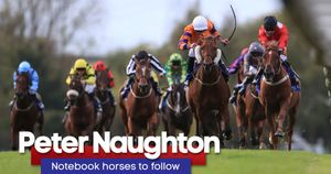 Add Peter Naughton's horses to follow to your My Stable tracker