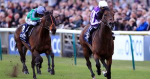 Magna Grecia is clear in the QIPCO 2000 Guineas