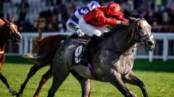 Silver Quartz in action at Ascot