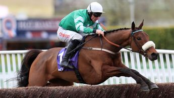Presenting Percy is brilliant in the RSA Chase