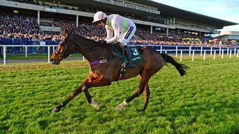 Douvan: Can deliver in Tingle Creek