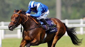 Taghrooda (pictured winning the King George) has a son running at Newmarket on Wednesday
