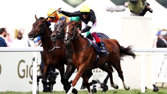 Stradivarius - one of the star names at Glorious Goodwood
