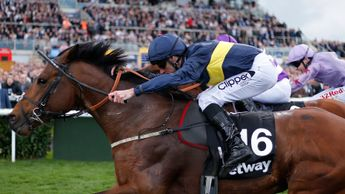 Lincoln winner Bravery has become well treated again