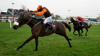 The Young Master storms home at Cheltenham