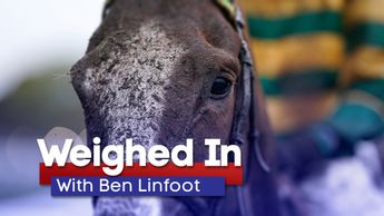 Find out which horses have caught Ben's eye this week
