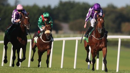 Beresford winner Saxon Warrior