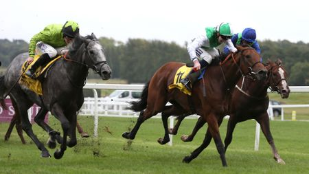Buzz (left) on his way to victory at Newbury