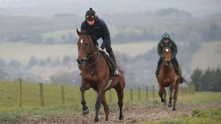 The New One gallops on Thursday morning