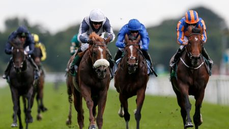 Ulysses, Churchill and Barney Roy could all meet again at Ascot