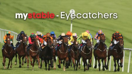 Check out our latest My Stable eyecatchers