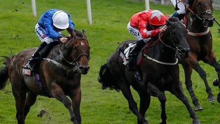 Toscanini (left): Can win Ayr Gold Cup
