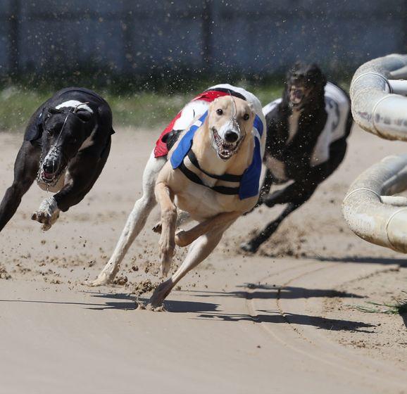 Irish greyhound derby 2021 betting advice 2001 winners ct betting