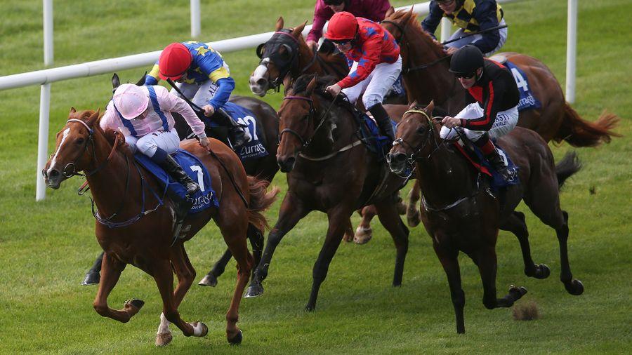Horse Racing News Etc    CLASSIFIED RACING & SPORTS FORUM