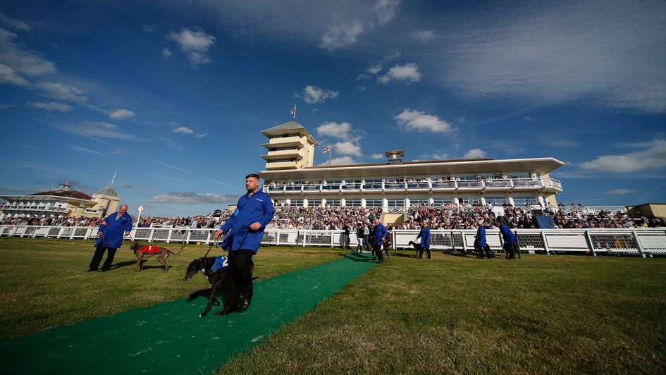 Greyhounds Dogs On Parade At Towcester