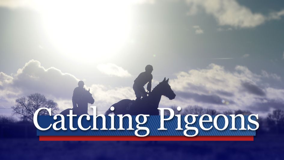Catching Pigeons: Gossip and tips from the gallops - Horse Racing