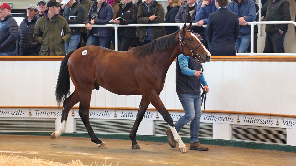 By Frankel, half-brother to Golden Horn (Tattersalls)
