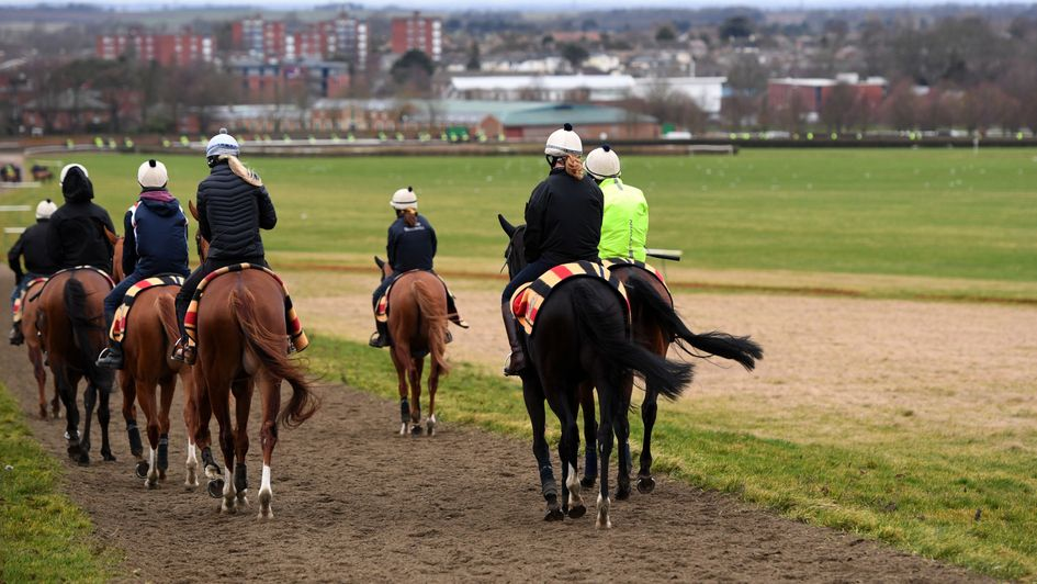 Racehorses exercise in Newmarket on Friday morning
