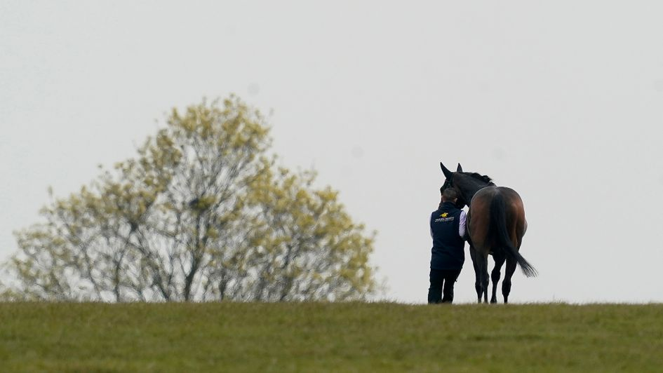 A horse is led back to the stables at Newmarket