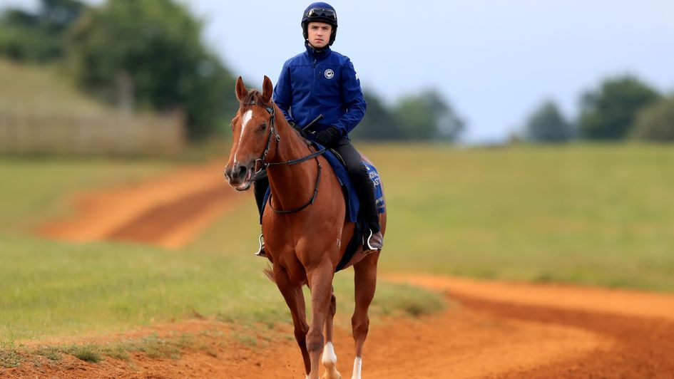 Redkirk Warrior on the gallops at Newmarket