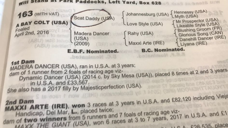 The page for the 900,000 guineas Scat Daddy