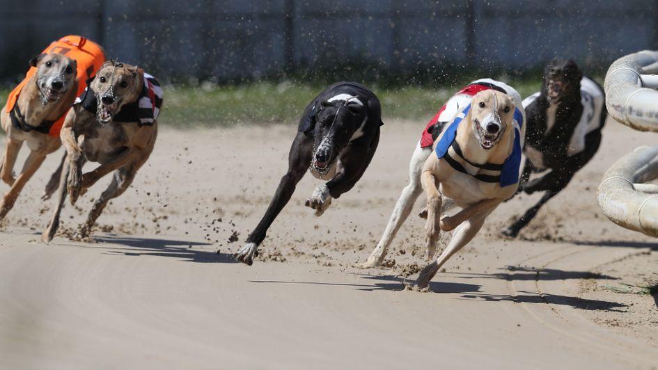 Jonathan Hobbs: Greyhound deja vu and greyhound of the month voting