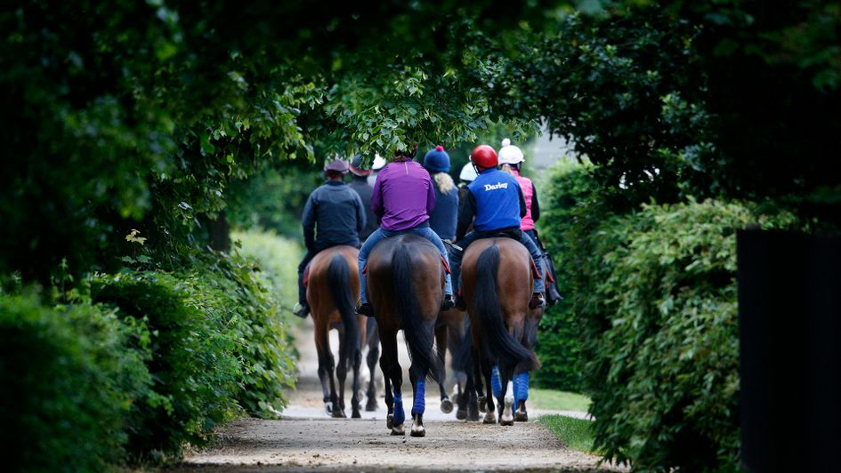 Jeremy Noseda's Newmarket string are worth keeping an eye on in the months ahead