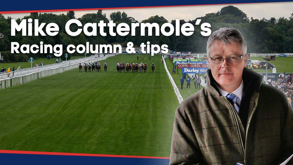 Check out the latest thoughts of Mike Cattermole in this week's column