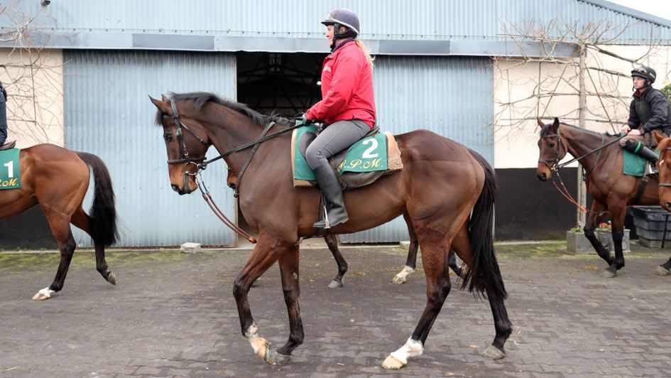 Douvan pictured at Willie Mullins' stable