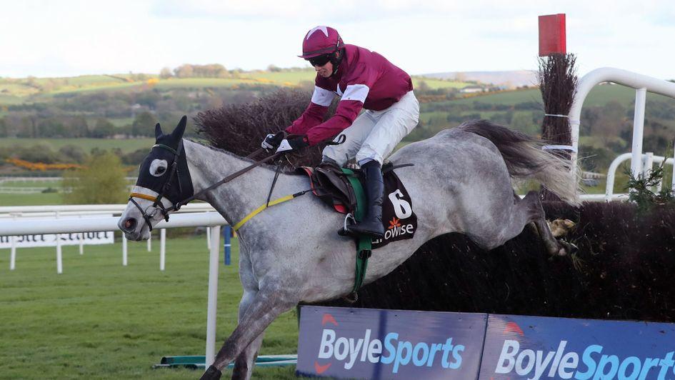 Image result for Disko horse