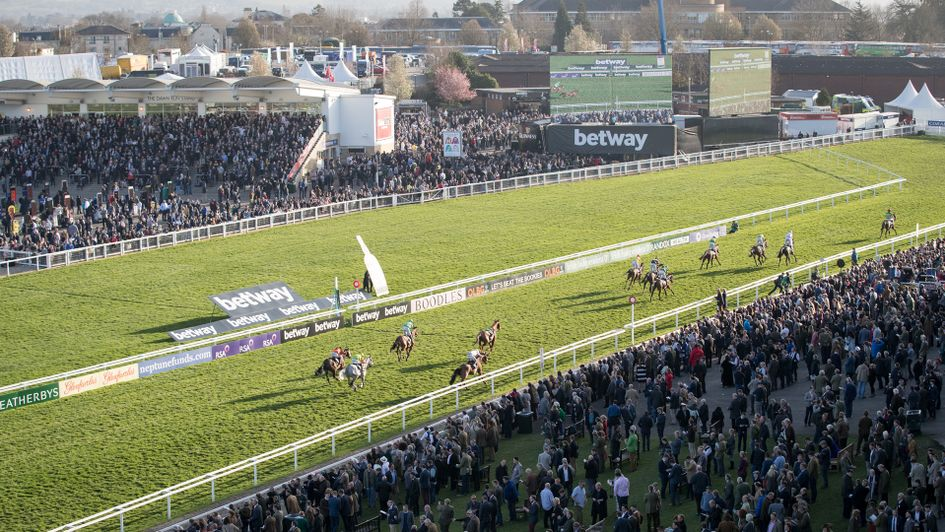 A general shot of the finish at Cheltenham