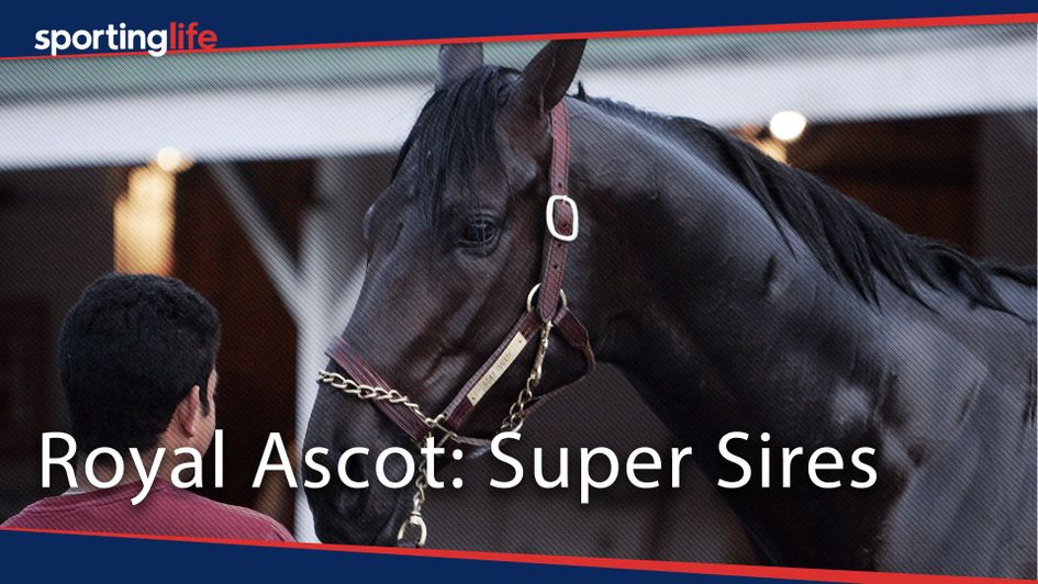 Scat Daddy: A super sire at Ascot, that's for sure