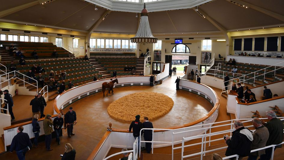 Tattersalls - record week in the sales ring