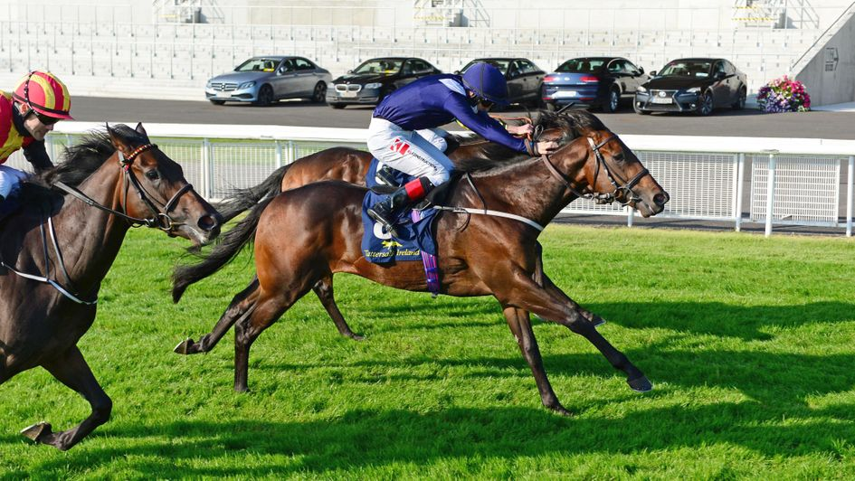 Horse racing betting odds tomorrow lyrics coin flip csgo skins betting