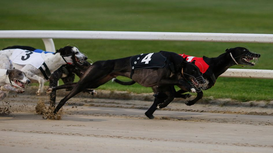Astute Missile (T4) turns prominently at the first bend of the Greyhound Derby
