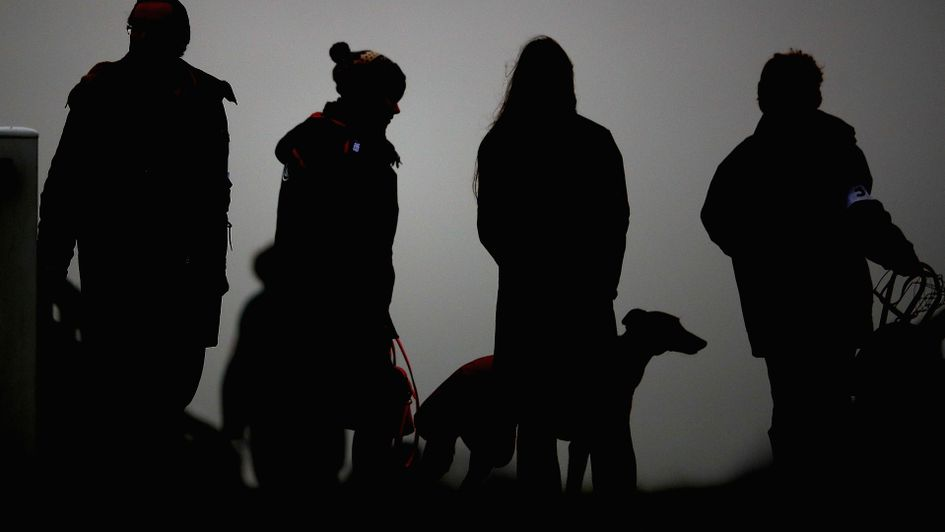 Greyhounds silhouetted