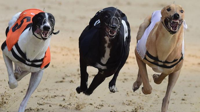Mildenhall dogs betting on sports bet on direct tv