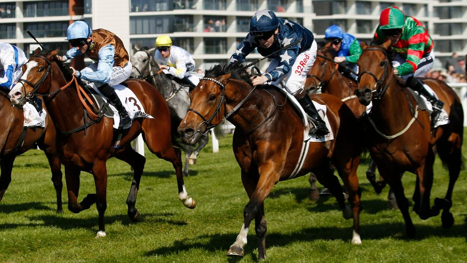 Luca Cumani's Banksea up for the Cup at Newbury - Horse ...